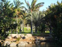 Palmetum_Tenerife_zona_Madagascar..JPG